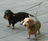 Сворки для собак