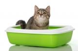 Туалеты для кошек, совки