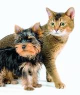 Лакомства для собак и кошек