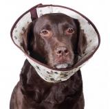 Защитный воротник для собак и кошек
