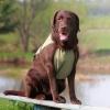 Охлаждающая попона для собак OSSO Fashion.  Размер 60