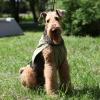 Охлаждающая попона для собак OSSO Fashion.  Размер 40