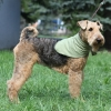 Косынка охлаждающая OSSO Fashion для собак. Размер M