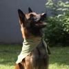 Косынка охлаждающая OSSO Fashion для собак. Размер L