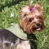Косынка охлаждающая OSSO Fashion для собак. Размер S
