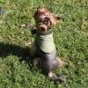 Косынка охлаждающая с липучкой и жаккардовой лентой OSSO Fashion для собак. Размер S