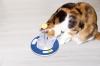 Интерактивная игрушка для кошек Активный кот