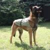 Охлаждающая попона для собак OSSO Fashion. Размер 50