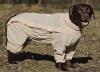 Комбинезон для собак с ловушками от клещей OSSO Fashion р. 60 (сука)