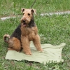 Охлаждающий коврик для собак  75*100